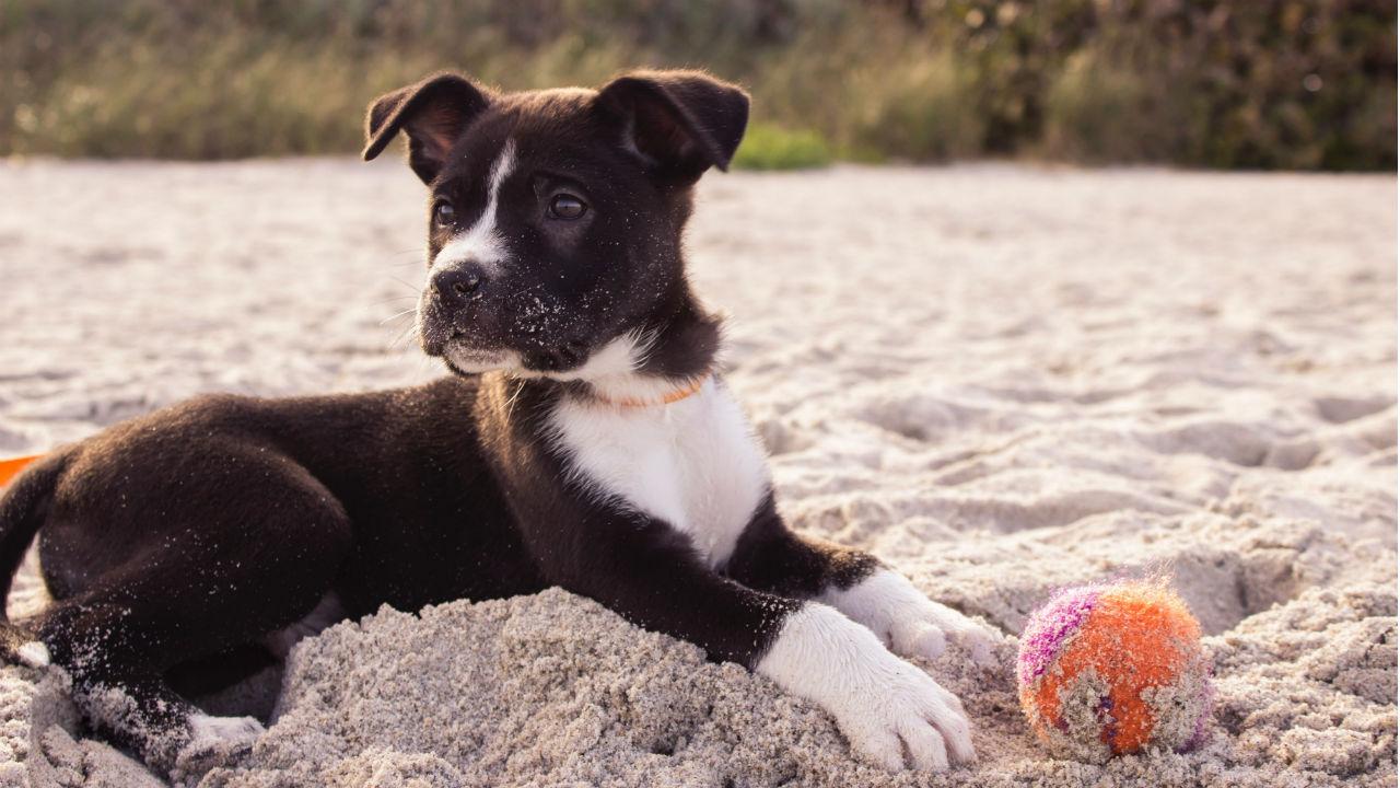 Alle dingen die je moet weten als je een hond aanschaft